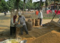 Tarai farmers hit by higher production costs and poor earnings
