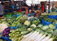 कालिमाटीमा परीक्षणः तरकारीमा विषादी घट्दो